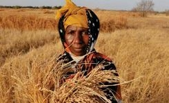 State of Food Insecurity in the World 2015